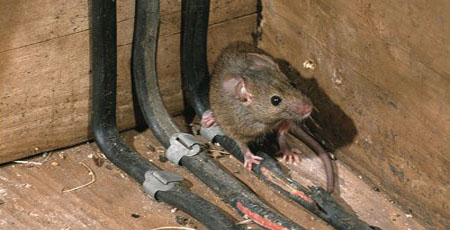 Hey Joe This Wiring Looks Delish (226) 600-5597 #RatRemoval