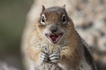 YES THE HOUSE IS OURS!!! CHARGE!!!! SQUIRREL S SEIZE THE HOME! (226) 600-5597 #SquirrelRemoval