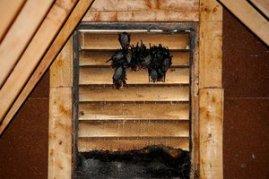 Bats Love Louvre Vents #BatRemoval (226) 600-5597