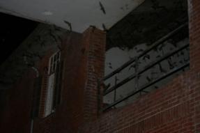 #HuntsvillePestControl Huntsville #Bats #BatRemoval (226) 600-5597 Ontario, Canada