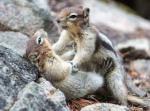 1a96c-squirrels2bin2blove